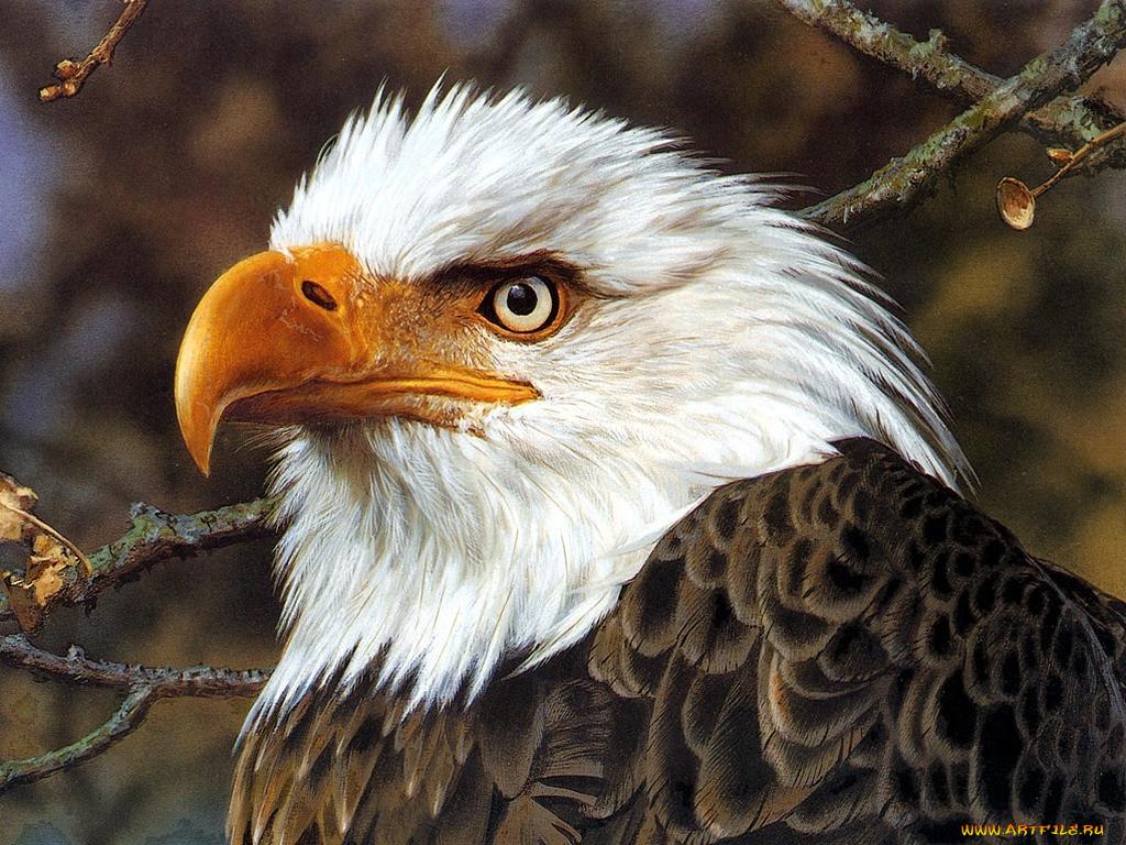 картинки про птицы животные приглашения германию свободной